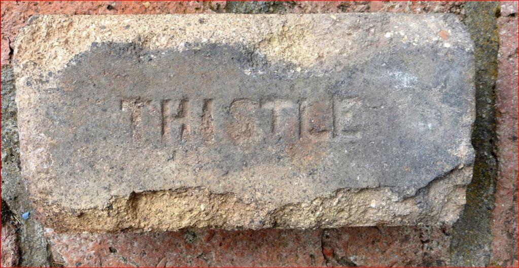 Thistle - Chile