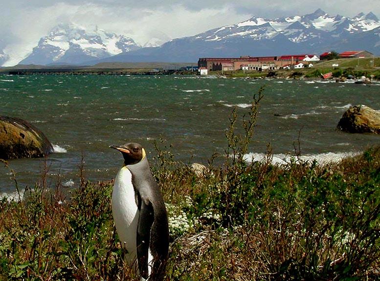 bories_pinguino