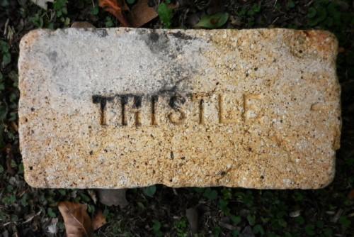 thistle found Argentina